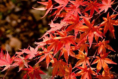 Japanese lesson - Upper Intermediate - Private