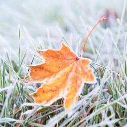 frostleafblog-1024x683.jpg
