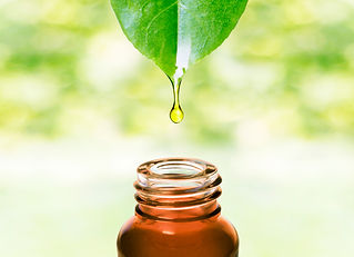 Aromtherapy oil dripping from leaf into glass bottle