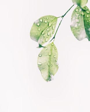 water-drops-on-green-leaves-1654255.jpg