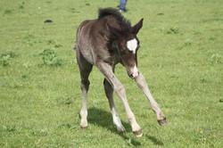 foalies 2011 032