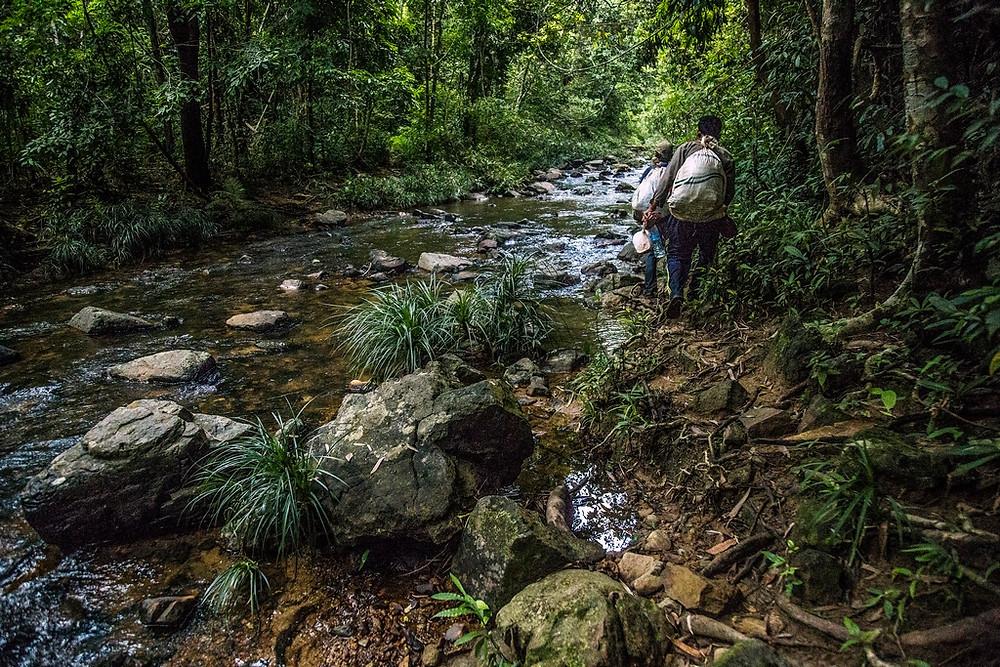 les impressionnantes et rude jungles du Ratanakiri (Sylvain Freulon©)