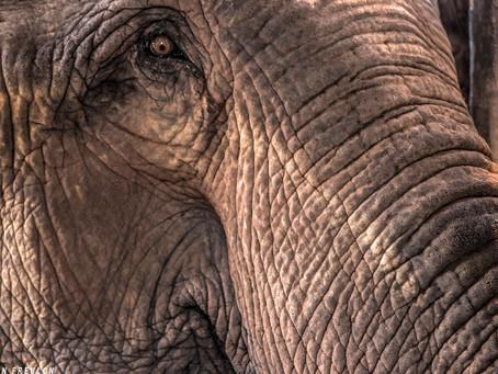 Laos : Les millions d'éléphants : Que sont-ils devenus ?