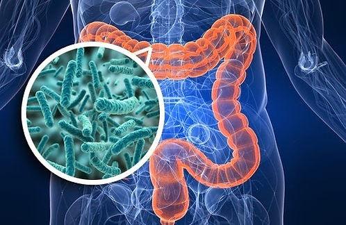 microbiota-intestinal-e-imunologia.jpg
