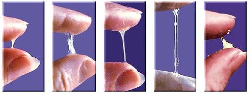 evolucao-do-muco-fertilidade-engravidar.
