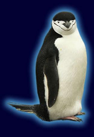 chinstrap_penguinspecies.jpg