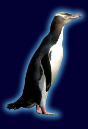 yellow_penguinspecies.jpg