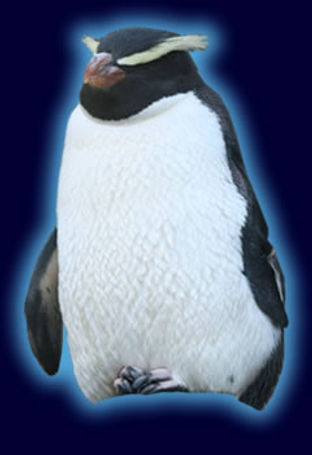 fiordland_penguinspecies.jpg