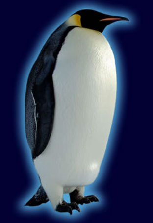 emperor_penguinspecies.jpg