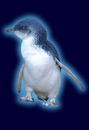 blue_penguinspecies.jpg