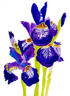 Siberian Irises –Watercolor