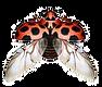 MARIENK%C3%84FER_FLUGEL_edited.png