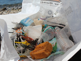 The Rising Plastic Tide