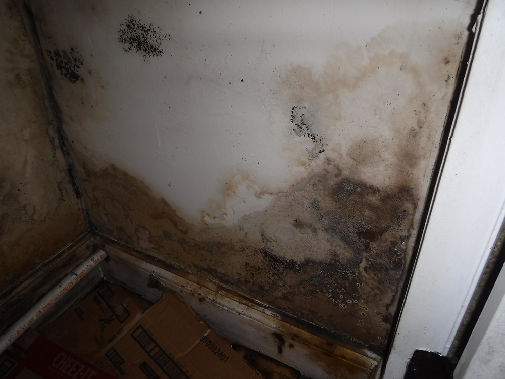 Recent home inspection with visible mold in a bathroom closet