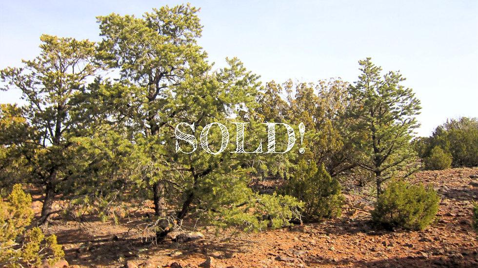 1.16 Acres - SHOW LOW PINES UNIT 3 LOT: 167, CONCHO, AZ