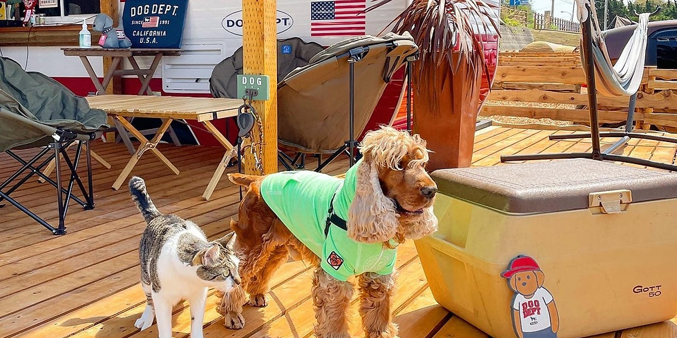 DOG ON BOARD CAMP EVENT