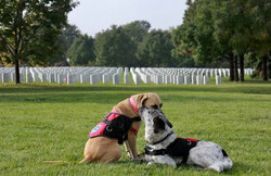 Freedom Service Dogs of America_1