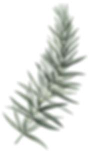 Flor4_edited.jpg