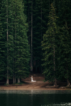 forest (1 of 1).jpg