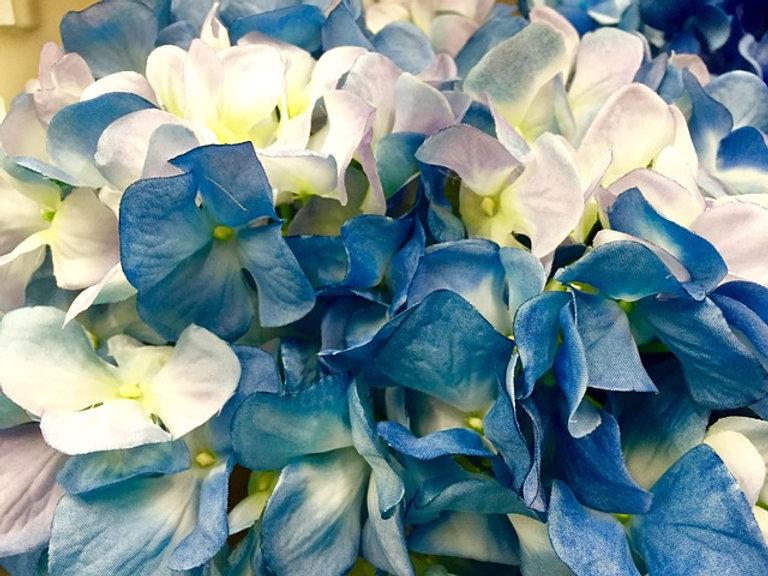 hydrangea-1623155_640.jpg