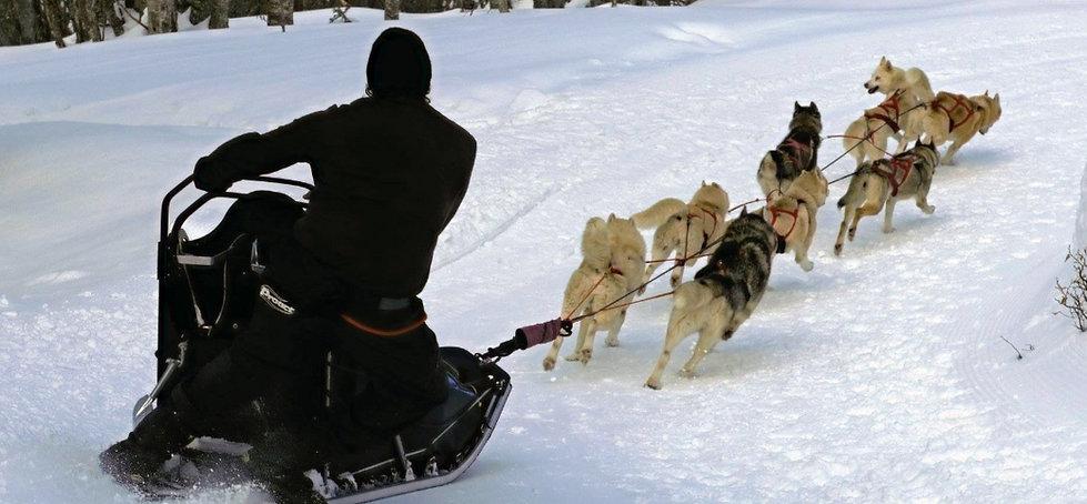 chiens de traineau porté puymorens Pyrénées