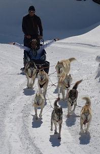 chiens de traineau porté puymorens pyrénées orientales