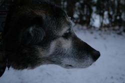 KELLY THE WONDER DOG