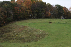 LONE HORSE ON HILL