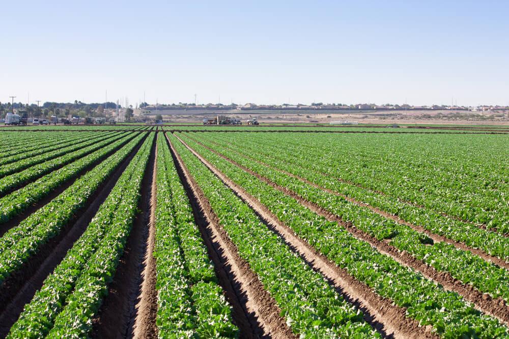 campo com apontamento eletrônico. uma agricultura de decisão diferente