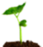 planta nascendo.png