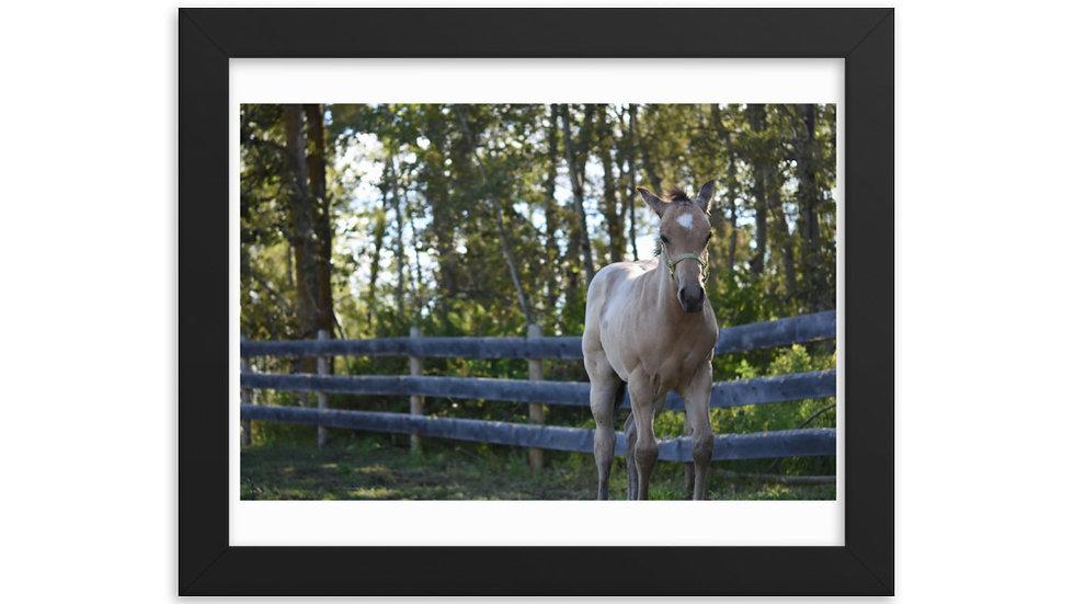 Framed poster - Foal