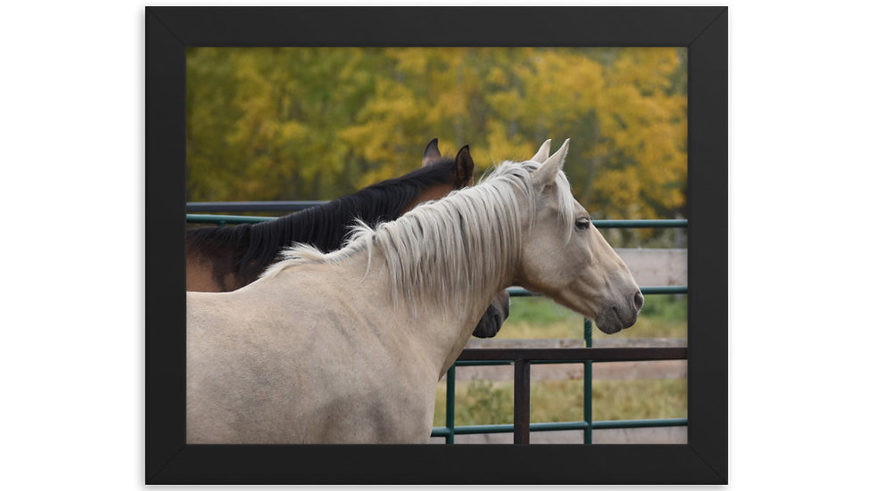Framed poster - Autumn Equine