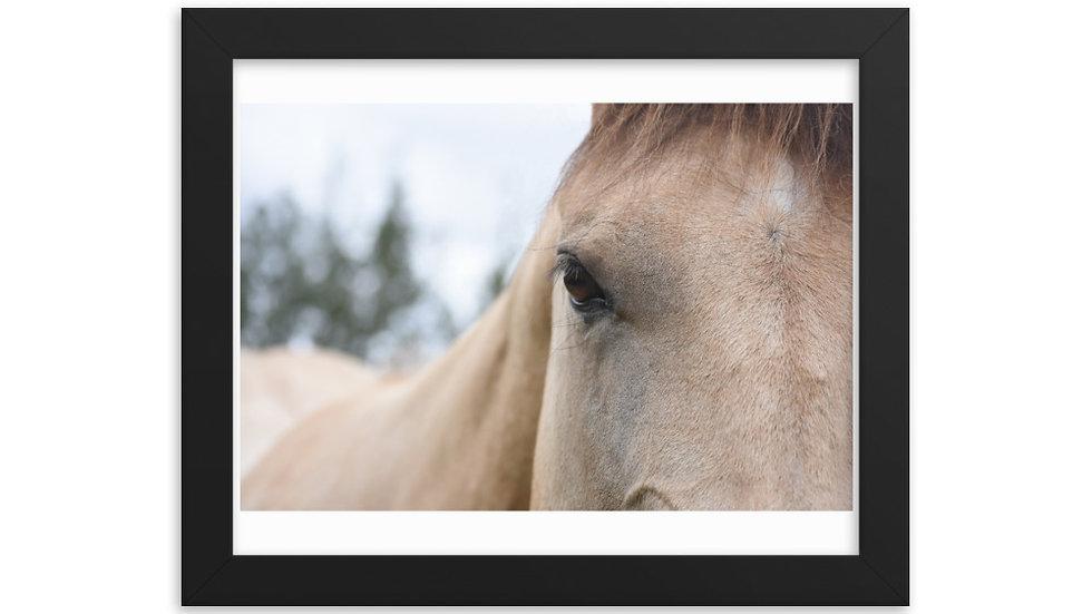 Framed poster - Buckskin Eye