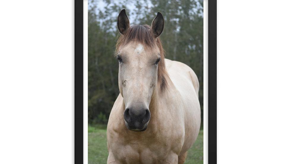 Framed poster: Buckskin Face