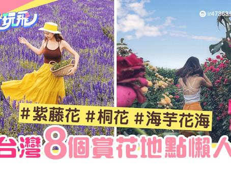 Pau, Andy Chin Hung 全台灣初夏賞花懶人包-精選8個至靚紫藤花-桐花-海芋花海