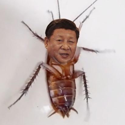 曱甴王 甴近平