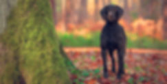 Dog and pet photography Newcastle Upon Tyne