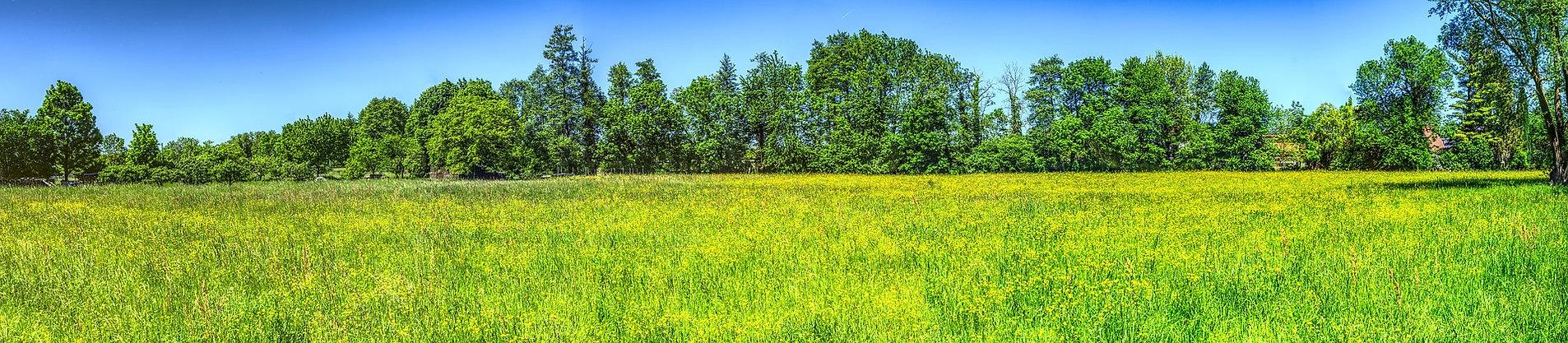 meadow-3383969_1920.jpg