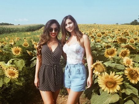 Picturesque Sunflower Farms