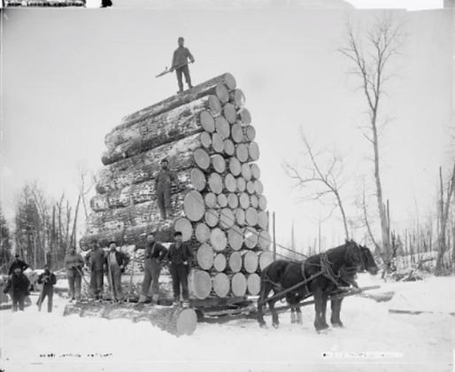 Deepwaterwood_LiveEdgeForest_1800s.png