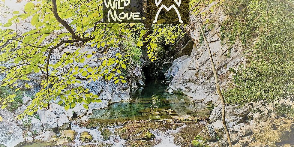 Randonnée / Hiking - Marche Méditative