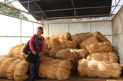 Dried Abaca