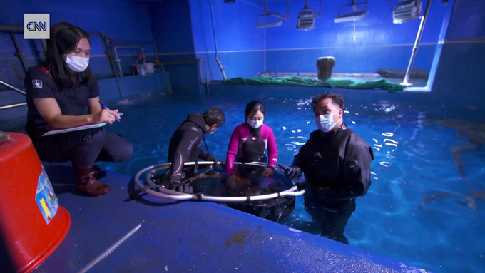 Swimming inside the Dubai Aquarium - CNN Video