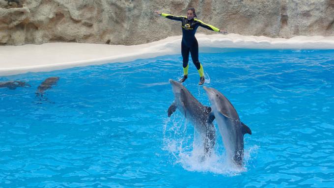 DUBAI DOLPHNARIUM-DOLPHIN & SEAL SHOW Indoor venue with dolphin & seal shows
