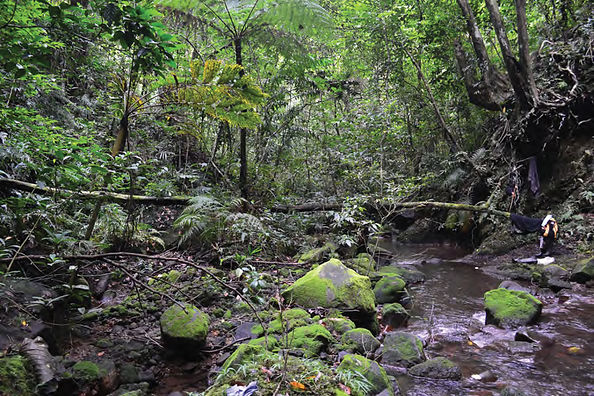 Mature_forest_in_the_crater_floor_of_Mt.