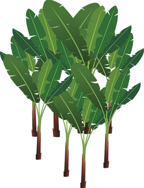 258-2585902_abaca-png-palm-tree.png