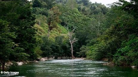 guatemala_mayabiospherereserve_forest_01
