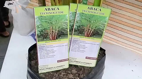 Abaca Plant Fiber can be made into many things...