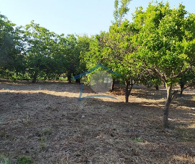 Terreno agricolo - Via Mariconda