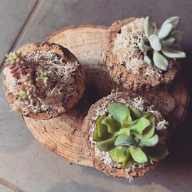 Composition de plantes grasses _#fleurs